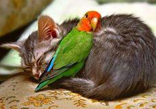 kot i papużka